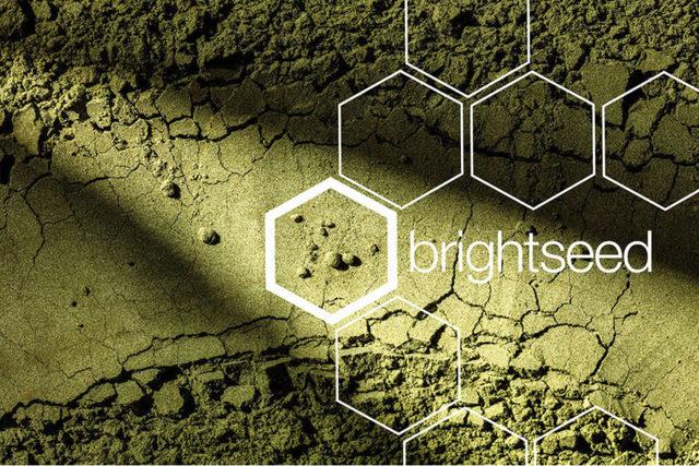 Brightseedlogopowder lead